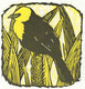 Yellowheaded Blackbird (Xanthocephalus)